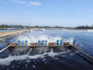 Máy ép bùn cho ngành thuỷ sản